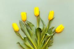 Cinq tulipes jaunes se situent dans un demi-cercle sur un fond vert en pastel image libre de droits