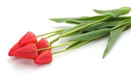 Cinq tulipes rouges image libre de droits