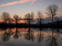 Cinque alberi e un fiume Fotografie Stock