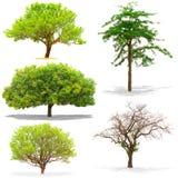 Cinque alberi isolati su fondo bianco Immagini Stock Libere da Diritti