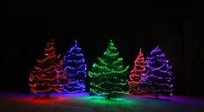 Cinque alberi sempreverdi coperti di luci Fotografia Stock