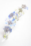Cinque bottiglie di vetro con i fiori blu Fotografie Stock