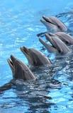 Cinque delfini Immagini Stock