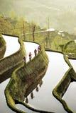 Cinque donne che camminano sopra un riso di montagna sistemano in Cina Fotografia Stock