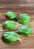 Cinque foglie di basilico Immagini Stock Libere da Diritti