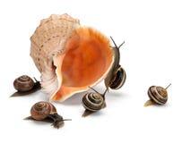 Cinque lumache e conchiglia del mare Fotografia Stock Libera da Diritti