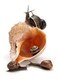 Cinque lumache e conchiglia del mare Fotografie Stock