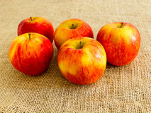 Cinque mele contro una tela Fotografia Stock