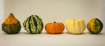Cinque mini zucche variopinte decorative delle forme differenti Fotografia Stock Libera da Diritti