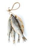 Cinque pesci secchi del triotto del mare sulla corda Fotografia Stock