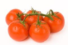 Cinque pomodori Fotografia Stock Libera da Diritti