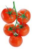 Cinque pomodori isolati su fondo bianco Fotografie Stock Libere da Diritti