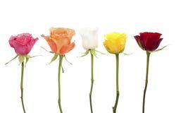 Cinque rose nei colori differenti Fotografie Stock Libere da Diritti