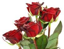 Cinque rose rosse Immagine Stock