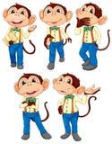 Cinque scimmie che portano le blue jeans Fotografia Stock