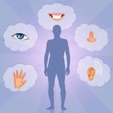 Cinque sensi illustrazione vettoriale