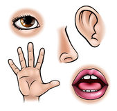 Cinque sensi royalty illustrazione gratis