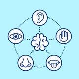 Cinque sensi umani che circondano cervello illustrazione vettoriale