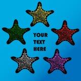 Cinque stelle marine variopinte Fotografia Stock Libera da Diritti