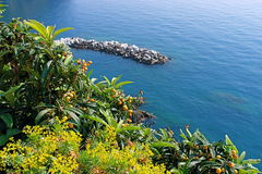 Cinque terre_14. Typical mediterranean vegetation and coast Stock Photography