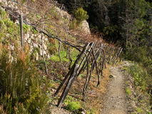 Cinque Terre detail - vineyard with path into the woods, winter Stock Photography