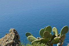 Cinque Terre, Liguria, b?rande turist f?r Italy F?r kaktusv?xt f?r taggigt p?ron en Opuntia royaltyfri foto