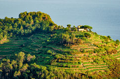 Cinque Terre (Liguria, Italy), green terraces Royalty Free Stock Image