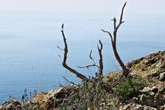 Cinque Terre, Liguria, turista que lleva del transbordador de Italy Un arbusto muerto en las rocas sobre el mar imágenes de archivo libres de regalías