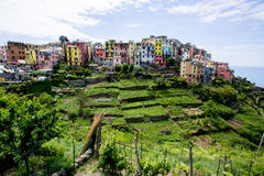 Cinque Terre village with colorful houses on a hill with terraced grass fields. Royalty Free Stock Photography