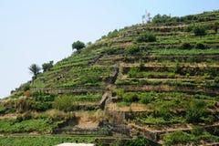 Cinque Terre vineyards Italy. Vineyards on the hilltop near the Italian Cinque Terre village of Manarola, a UNESCO world heritage site Stock Photos