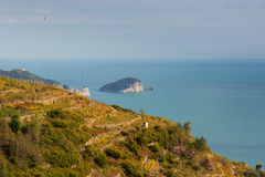 Cinque terre vineyards tino island in backgound Royalty Free Stock Image