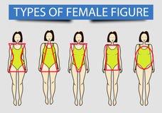 Cinque tipi di figure femminili, immagine illustrazione di stock