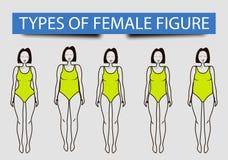 Cinque tipi di figure femminili, immagine di vettore illustrazione vettoriale