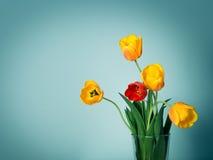 Cinque tulipani Fotografie Stock