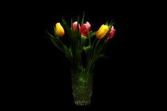 Cinque tulipani d'ardore sui precedenti scuri Fotografie Stock