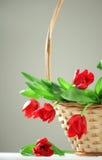 Cinque tulipani rossi in cestino Fotografie Stock