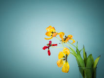 Cinque tulipani sbiaditi Immagine Stock