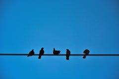 Cinque uccelli su un cavo Fotografia Stock Libera da Diritti