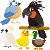 Cinque uccelli svegli variopinti Fotografia Stock