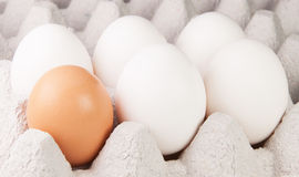 Cinque uova Brown di un e bianche sul vassoio Immagini Stock Libere da Diritti