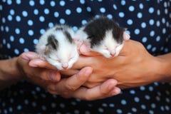 Cinque vecchi gattini del bambino di giorni Fotografie Stock Libere da Diritti