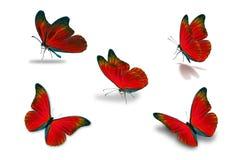 Cinquième papillon rouge photographie stock libre de droits