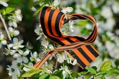 Cinta de San Jorge en un manzano floreciente Primavera de la victoria Victorioso pueda 9 de mayo - día de la victoria foto de archivo libre de regalías