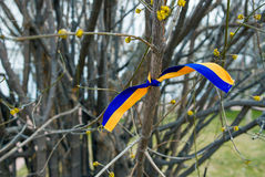 Cintas amarillas y azules en los árboles Fotos de archivo