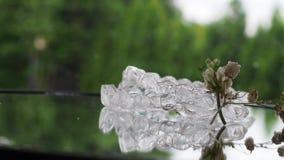 Cintas dos dentes no pântano invisível de vidro dos suportes na superfície de vidro vídeos de arquivo