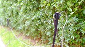 Cintas negras en la cerca al lado de los árboles Fotografía de archivo