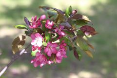 Cintilar nas flores da mola do sol imagens de stock royalty free