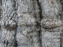 Cinza da casca de árvore fotos de stock