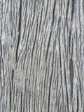 Cinza de madeira Imagens de Stock