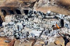 Cinza e chama na fogueira Conceito da fogueira do assado Turismo e fundo da chaminé Imagem de Stock Royalty Free